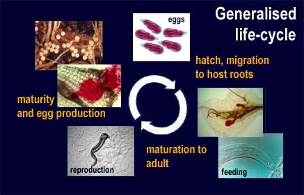 generalised life-cycle